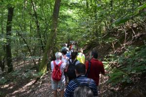 nel bosco verso Bergallo